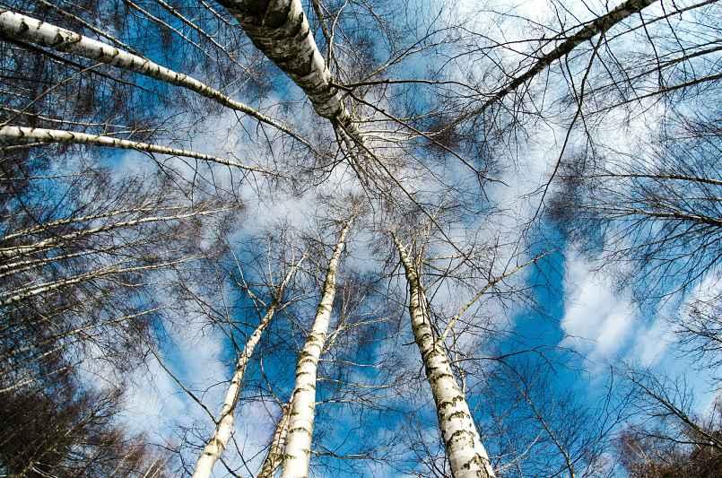 grupo de arboles mirados desde el suelo hacia arriba